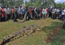 DANGEROUS CROCODILE KILLS 80 VILLAGERS